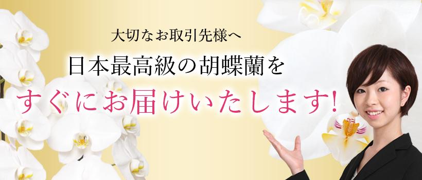 大切なお取引先様へ 日本最高級の胡蝶蘭をすぐにお届けいたします