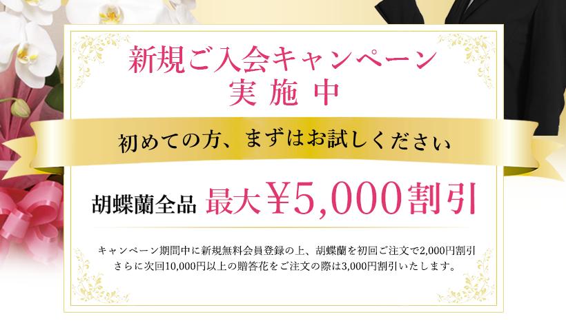 期間限定トライアルキャンペーン 胡蝶蘭5,000円割引